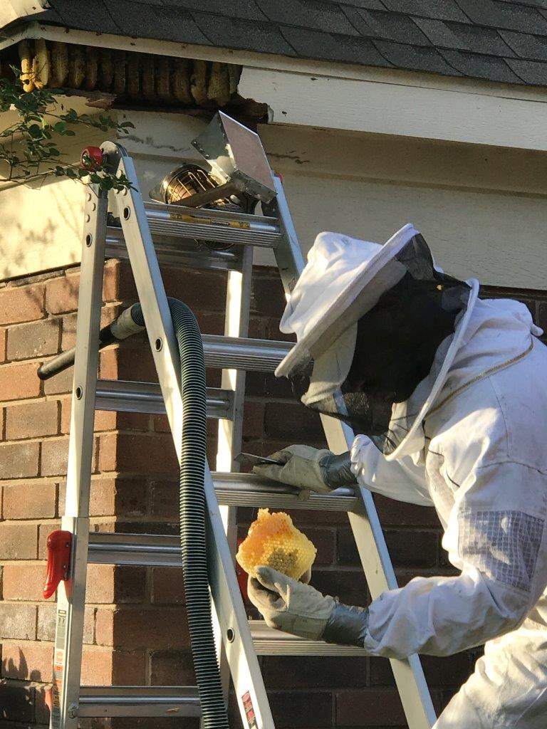 bee_removal_fresno_texas_absolutedefense